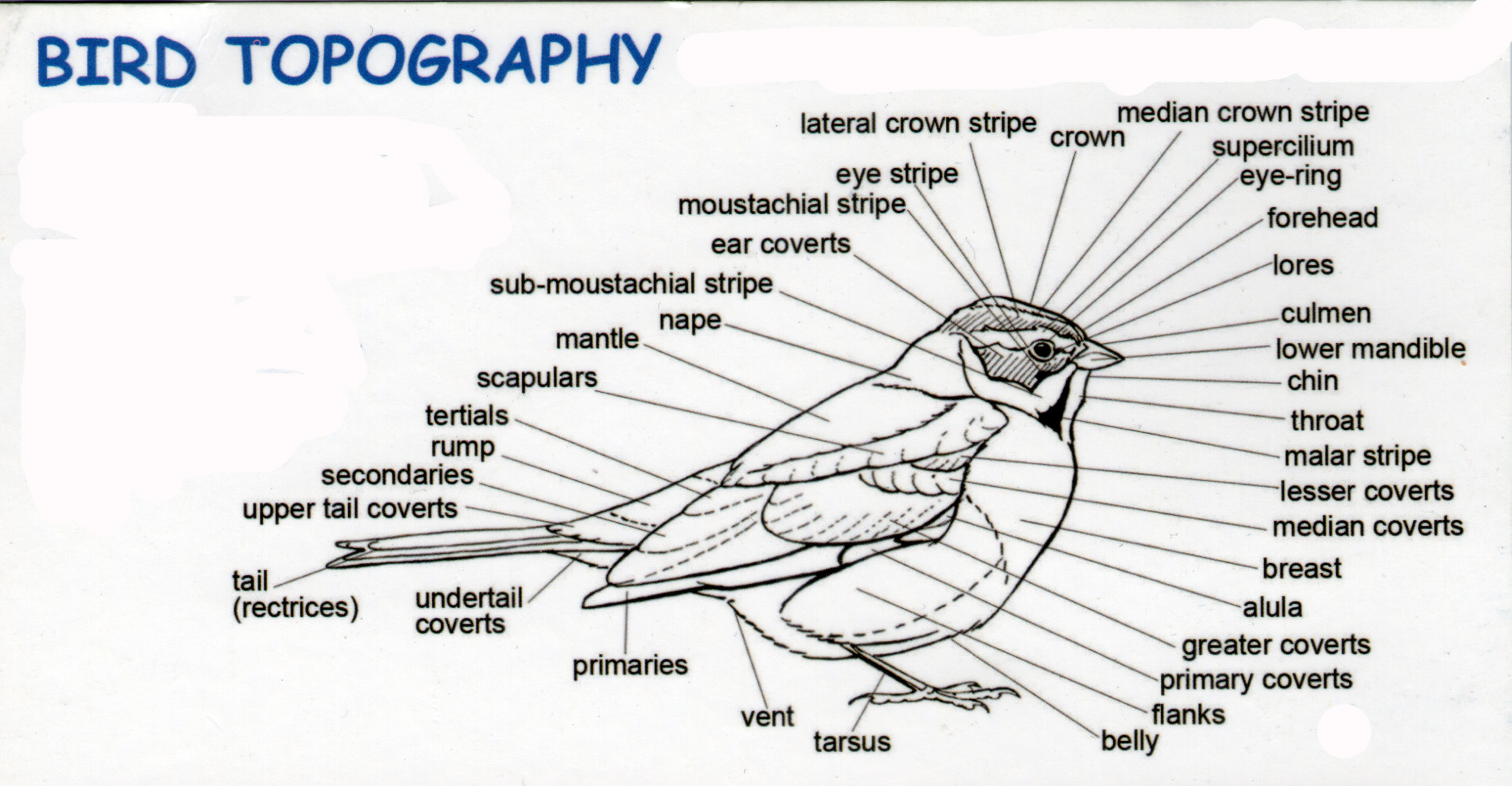 BIRD TOPOGRAPHY - Gear Guide - Chat - The RSPB Community