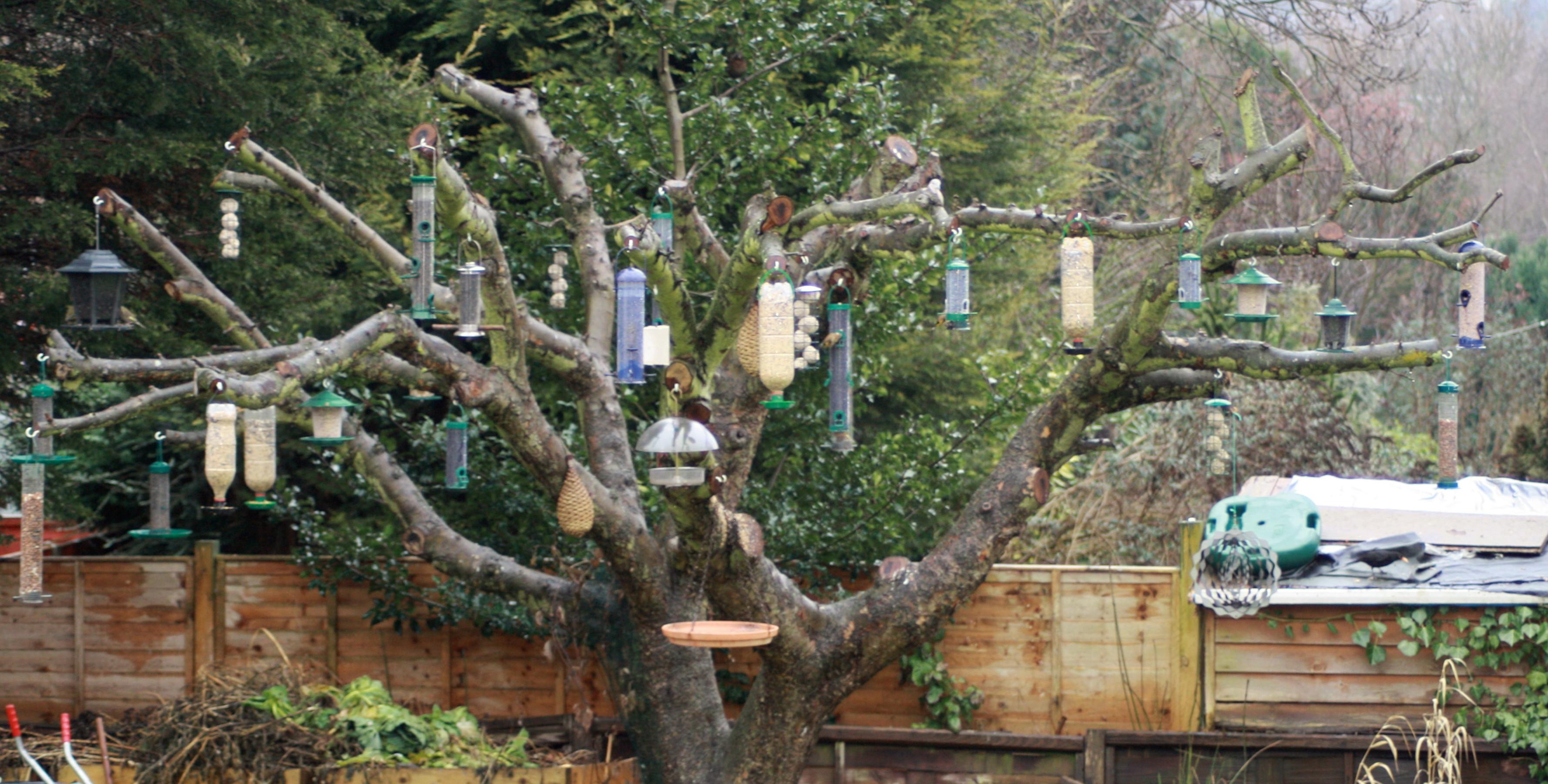 Placement Of Bird Feeders Wildlife Questions Wildlife