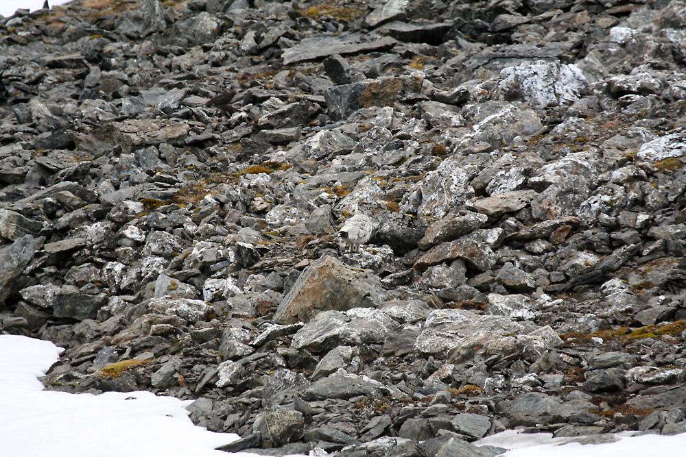 Quick Quiz! - Identify this - Wildlife - The RSPB Community