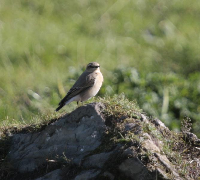 Dumfries and Galloway - birds - Identify this - Wildlife