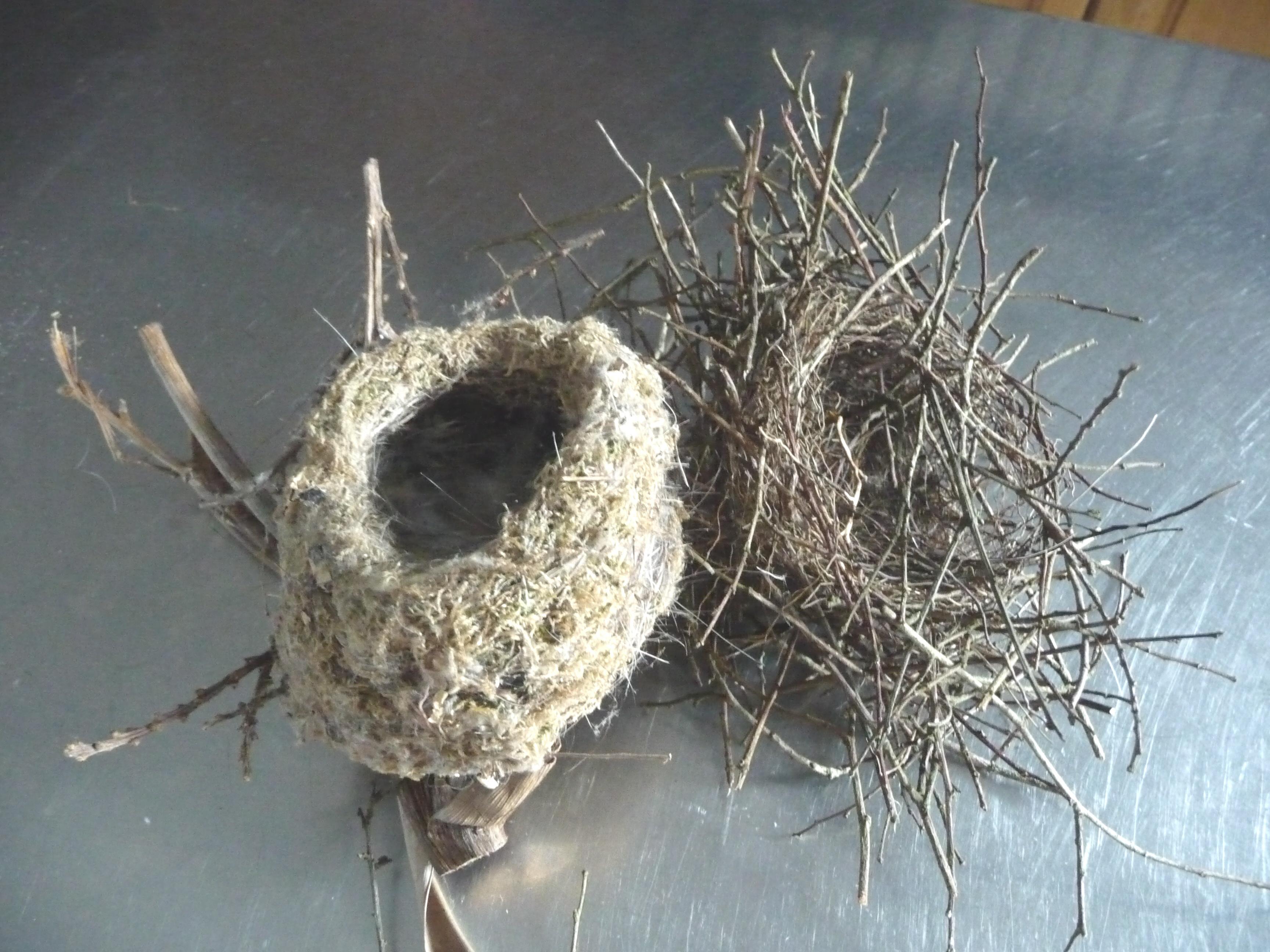 Bird Nests Birds' nests