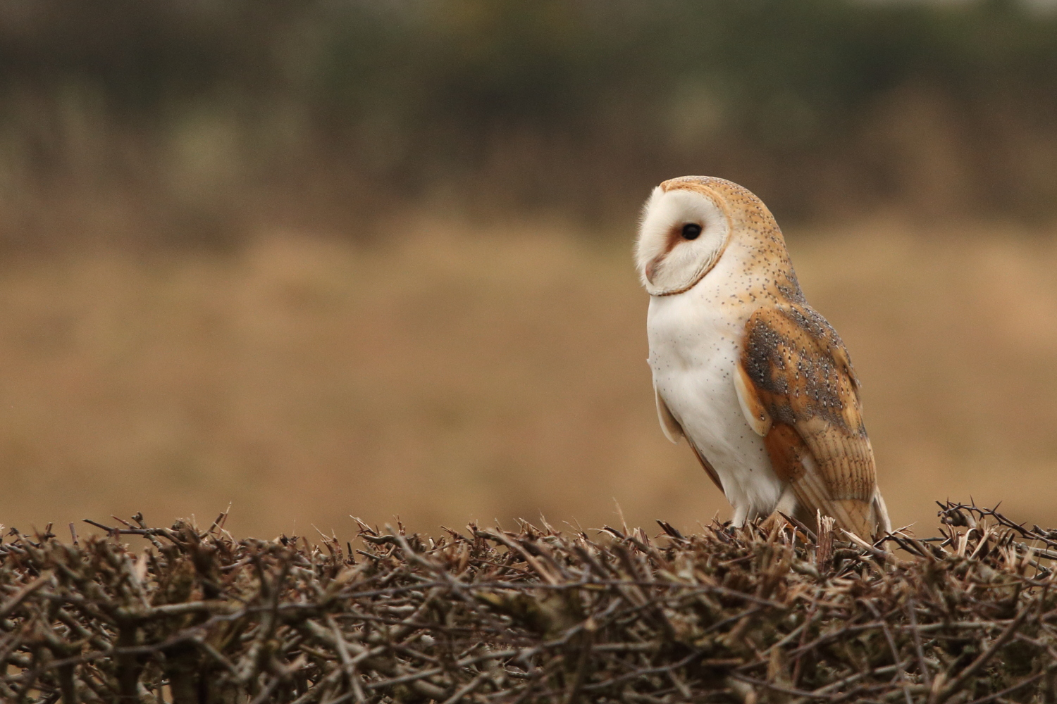 Operation Owl: Fighting raptor crime in North Yorkshire ...