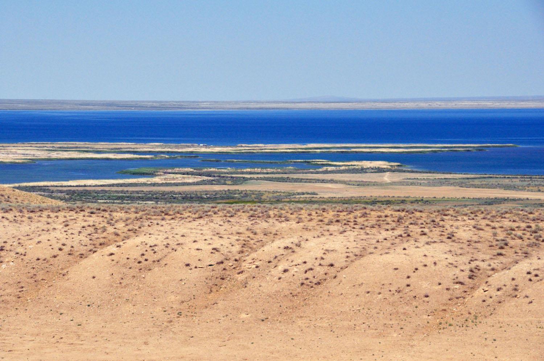 Where Is The Kyzylkum Desert And desert birdmunityKyzylkum Desert