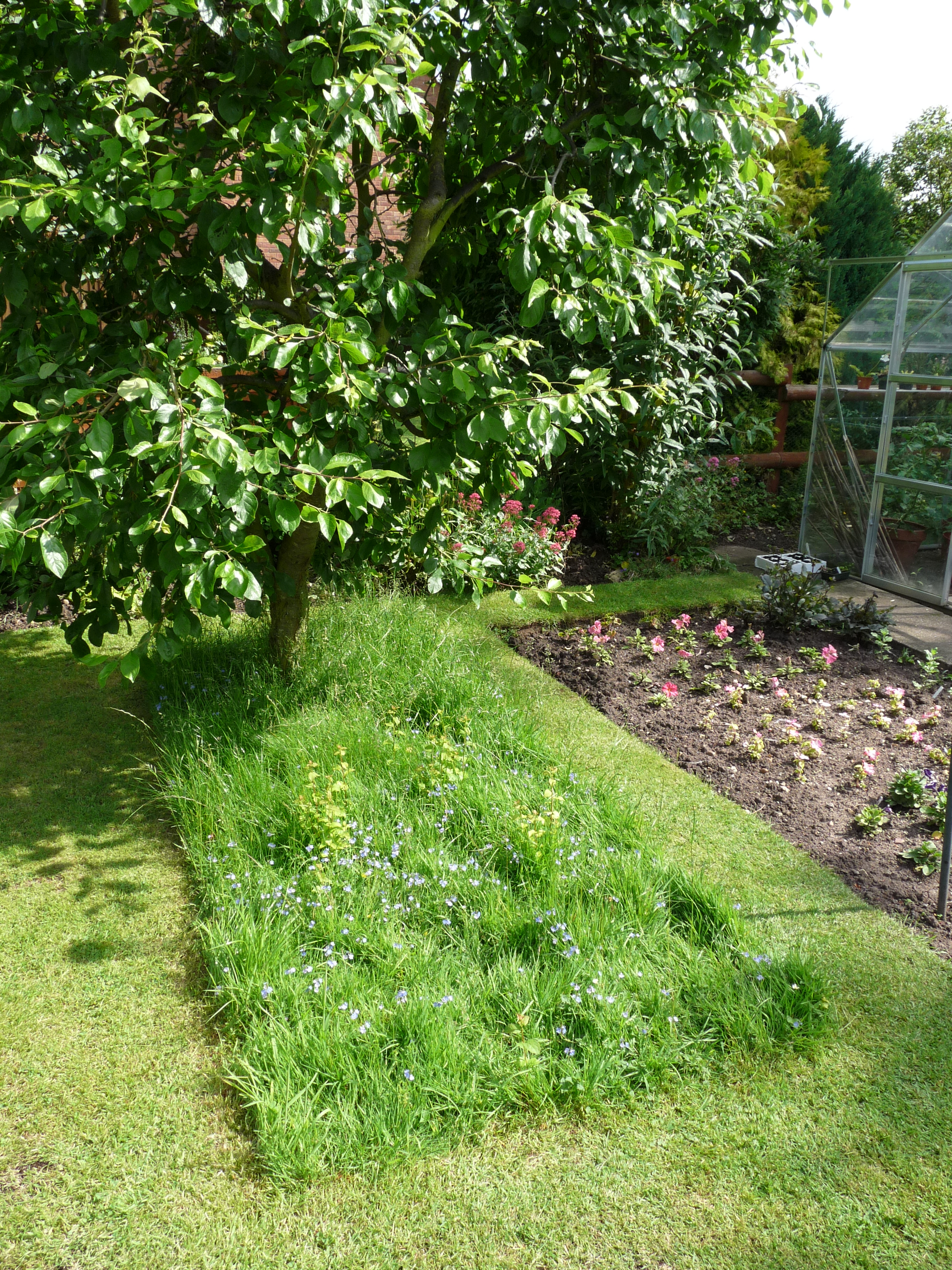 Long Grass That Looks Great Gardening For Wildlife