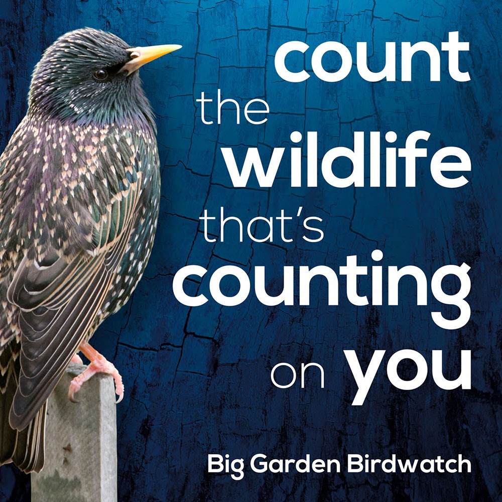 Big Garden Birdwatch, Everywhere in the UK | Be part of the world's largest wildlife survey.  | Nature, Wildlife, Relax, Birds, RSPB