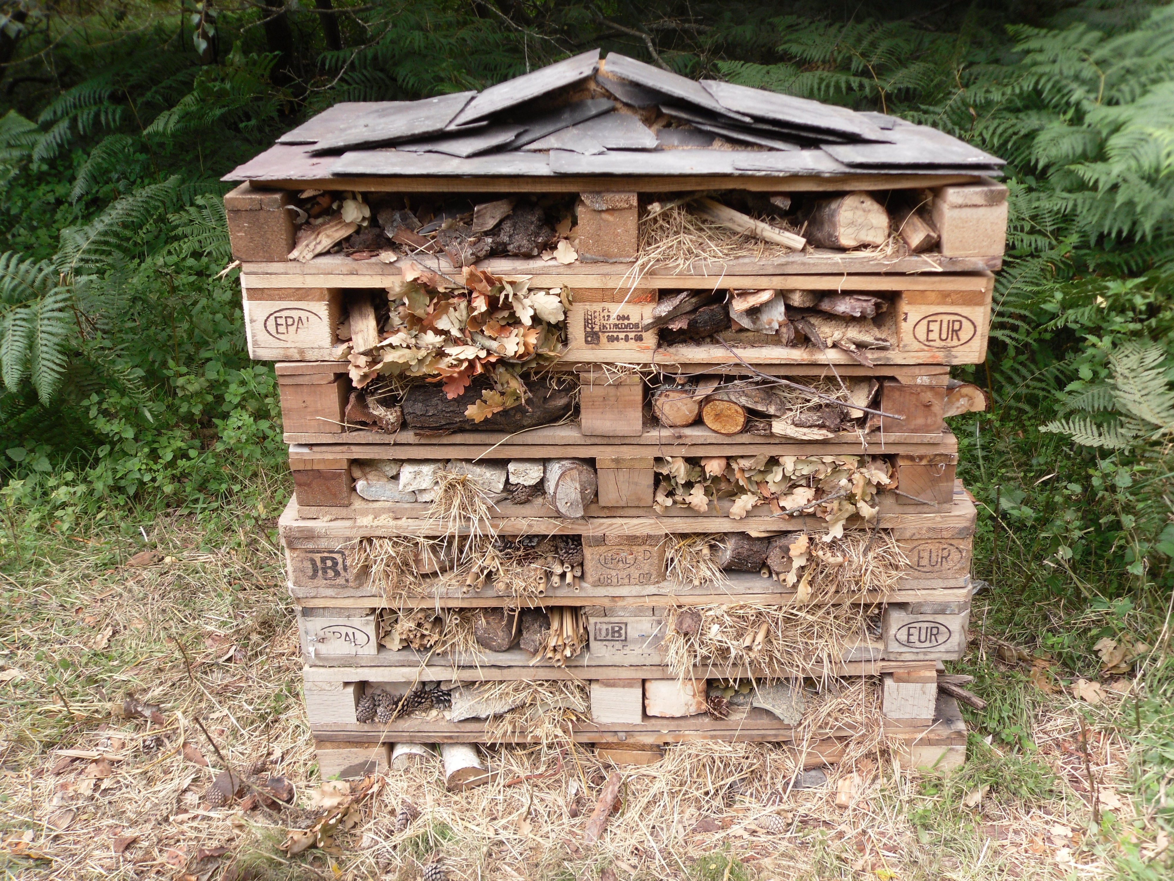 Bug Hotel Pictures