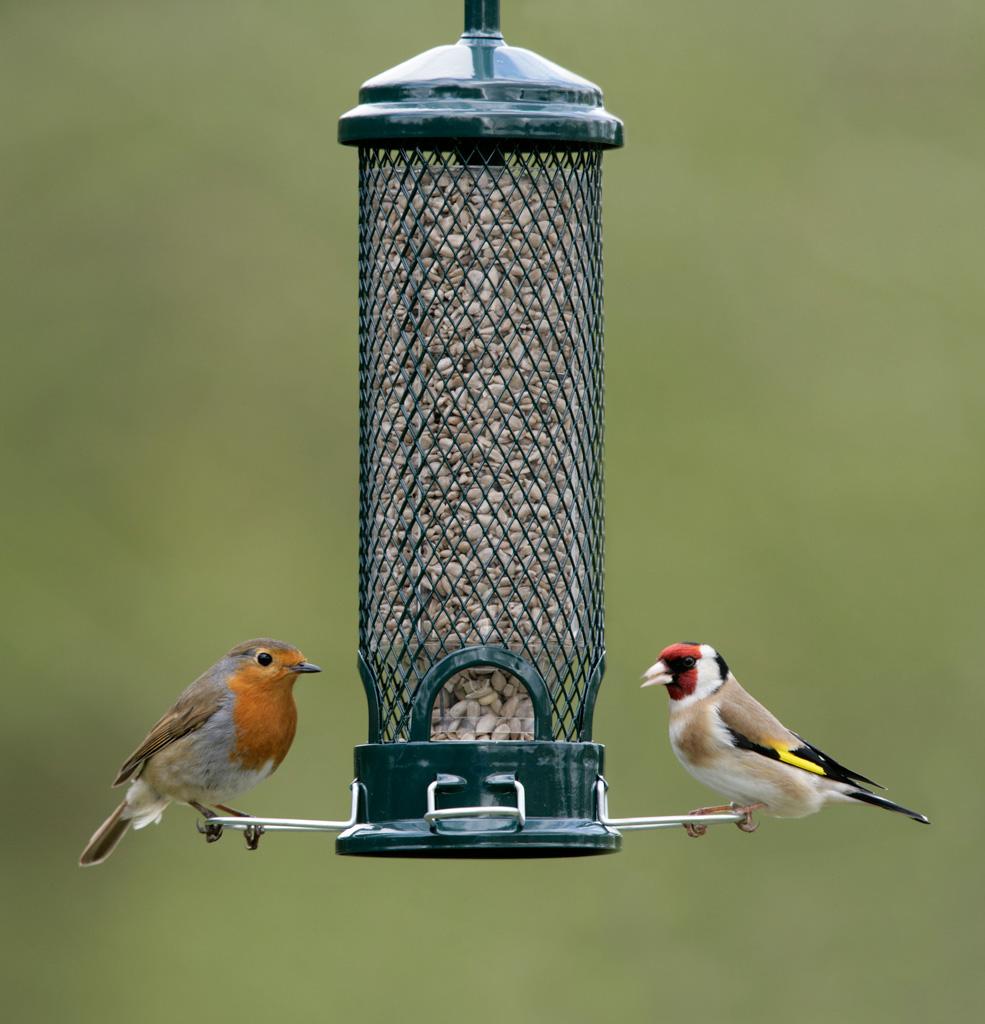 Love Birds Strumpshaw Fen And The Broads Strumpshaw