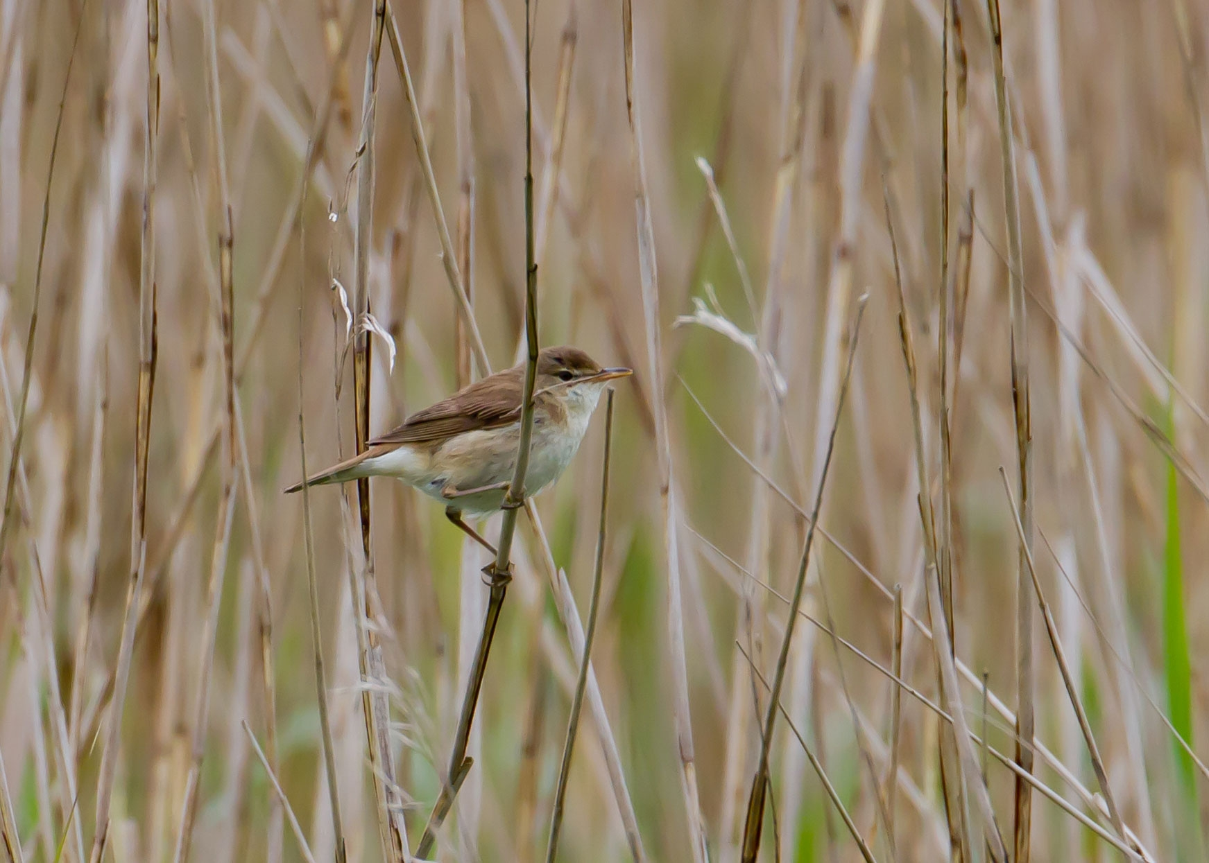 Who S Hiding In The Reeds Leighton Moss Leighton Moss The Rspb Community