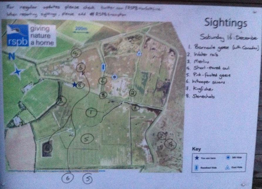 Frampton Marsh - Frampton Marsh - The RSPB Community