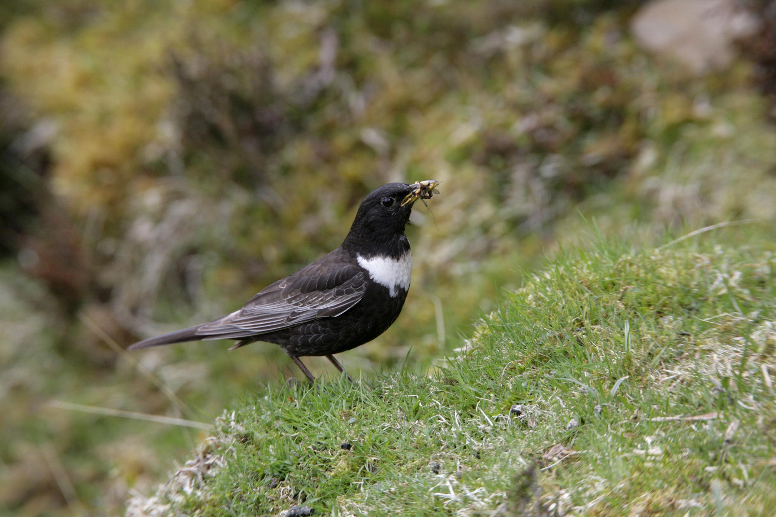 In praise of the monadhliaths scottish nature notes for Upullandpay