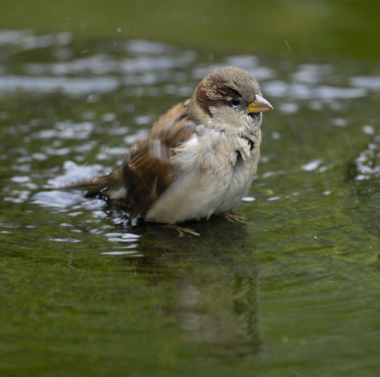 Cheerful chirps and boisterous behaviour scottish nature for Cheerful nature