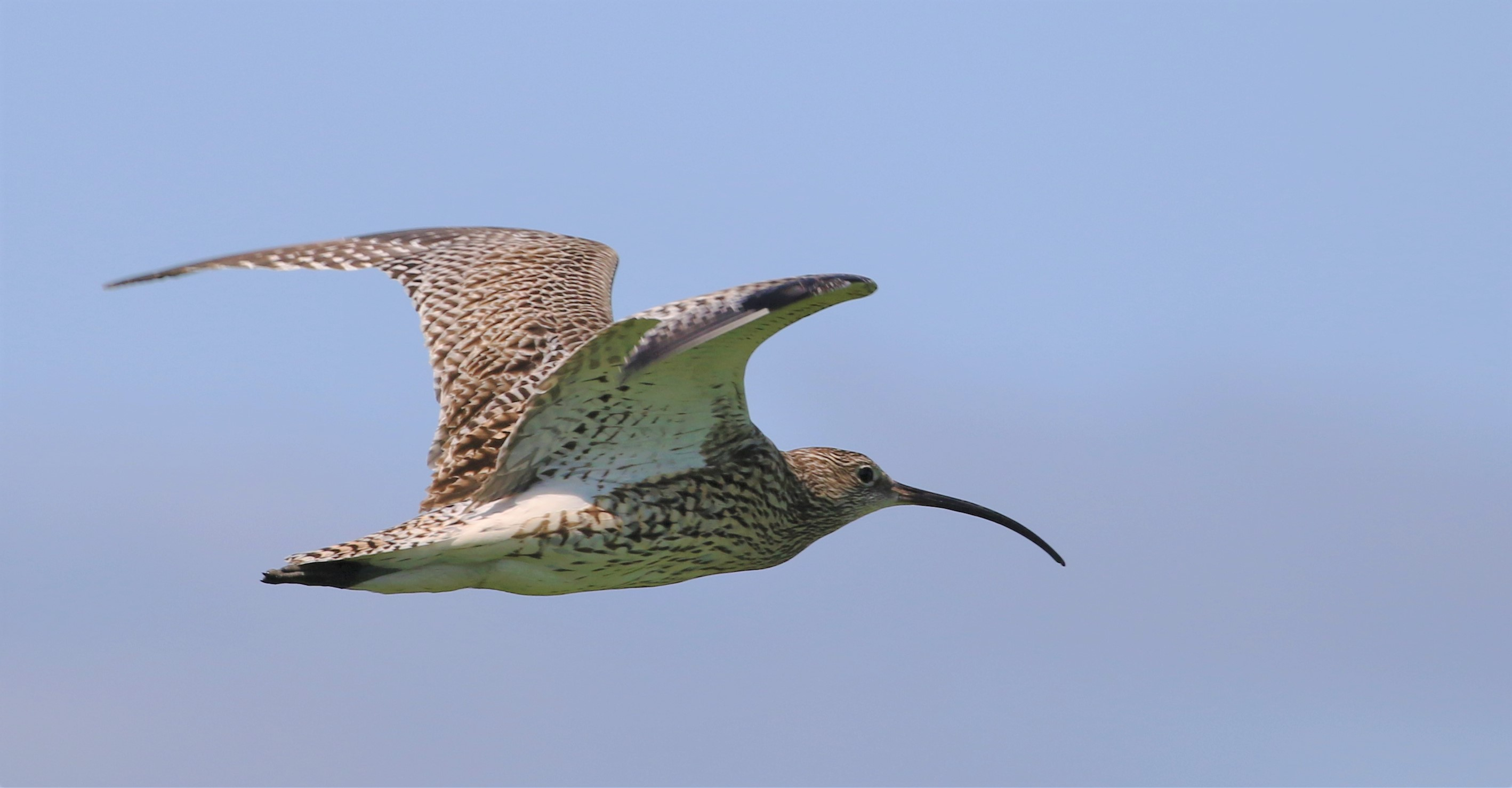 Antrim farmer helps give curlews a home - Giving Nature a Home in