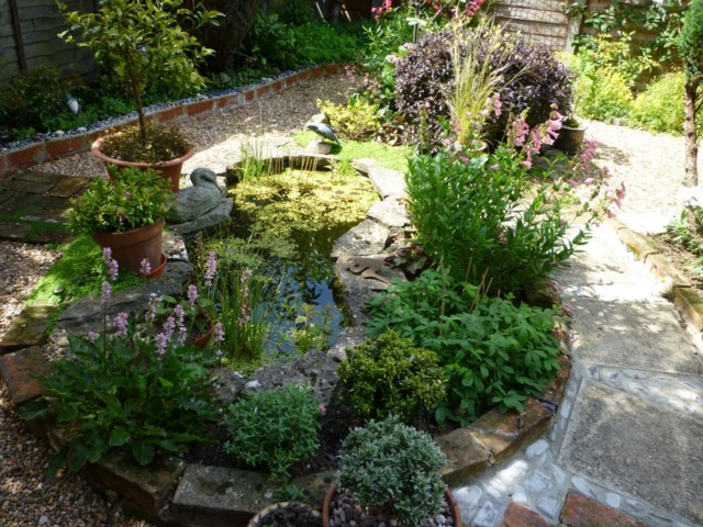 Garden pond fish losses-cats? - All creatures.... - Wildlife - The ...