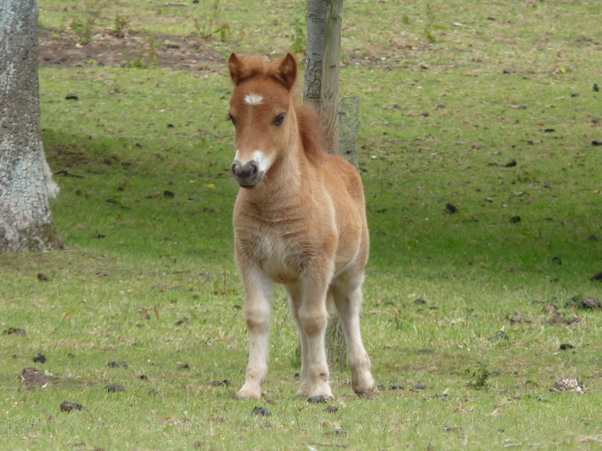 cute baby foals - photo #3