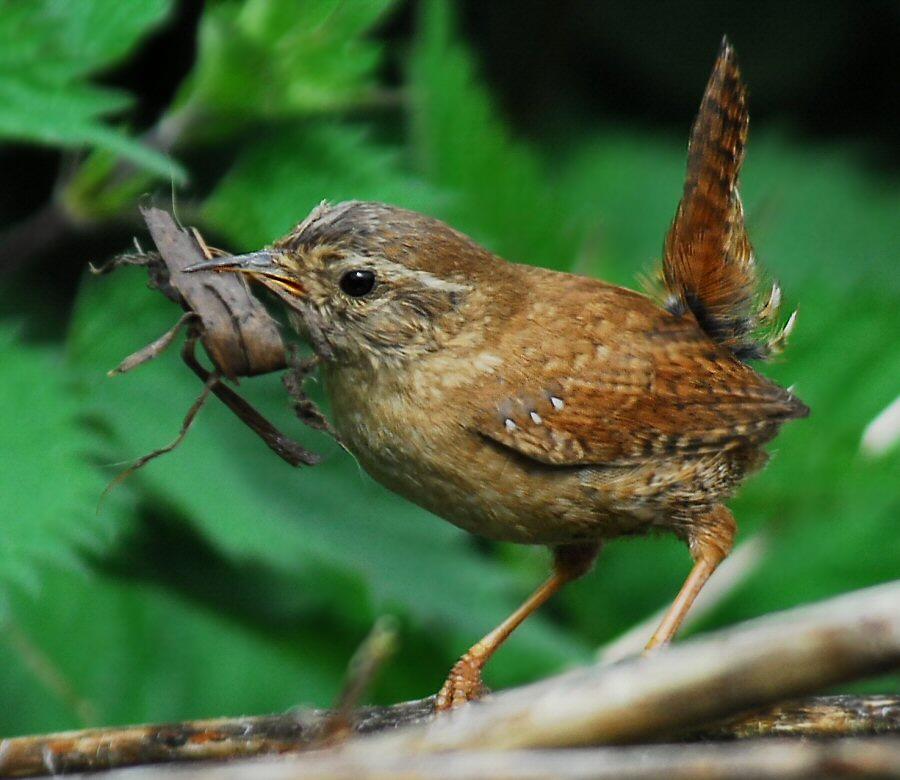 Bird Identification Guide