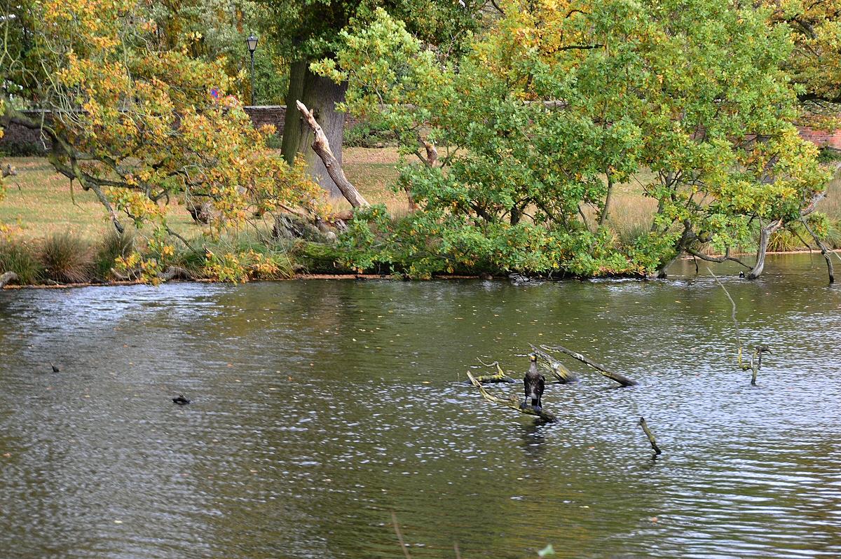 dunham massey park cheshire where to watch wildlife wildlife