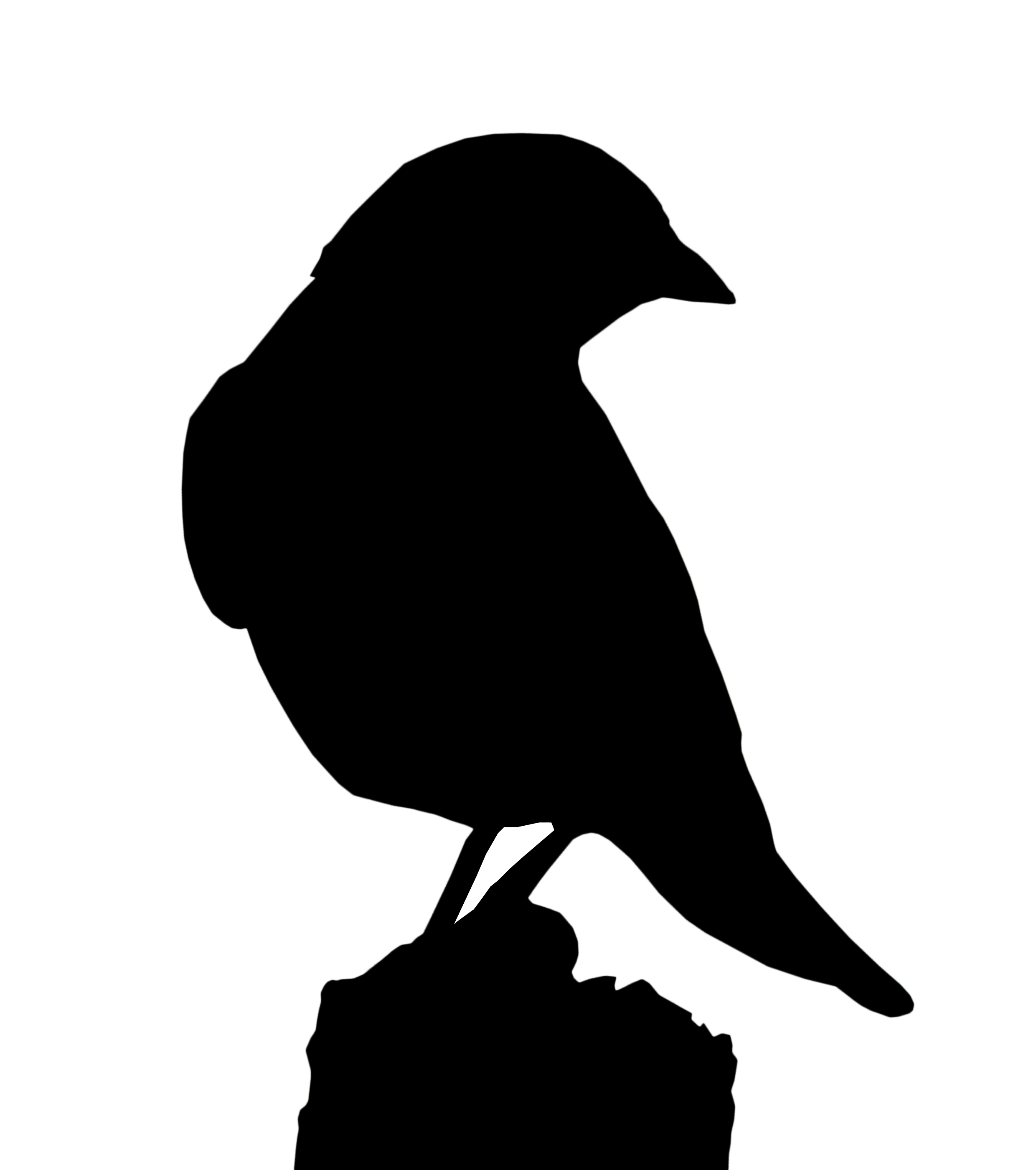 silhouettes just for fun polls and quizzes chat the rspb