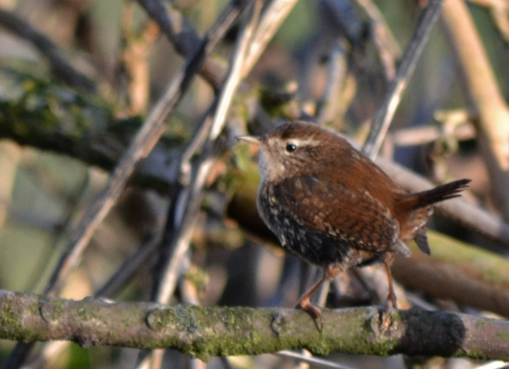 wrens chat sites Investigating, she found that several boxes contained nests and eggs of bluebirds, house wrens and tree swallows  chatfield state park,.