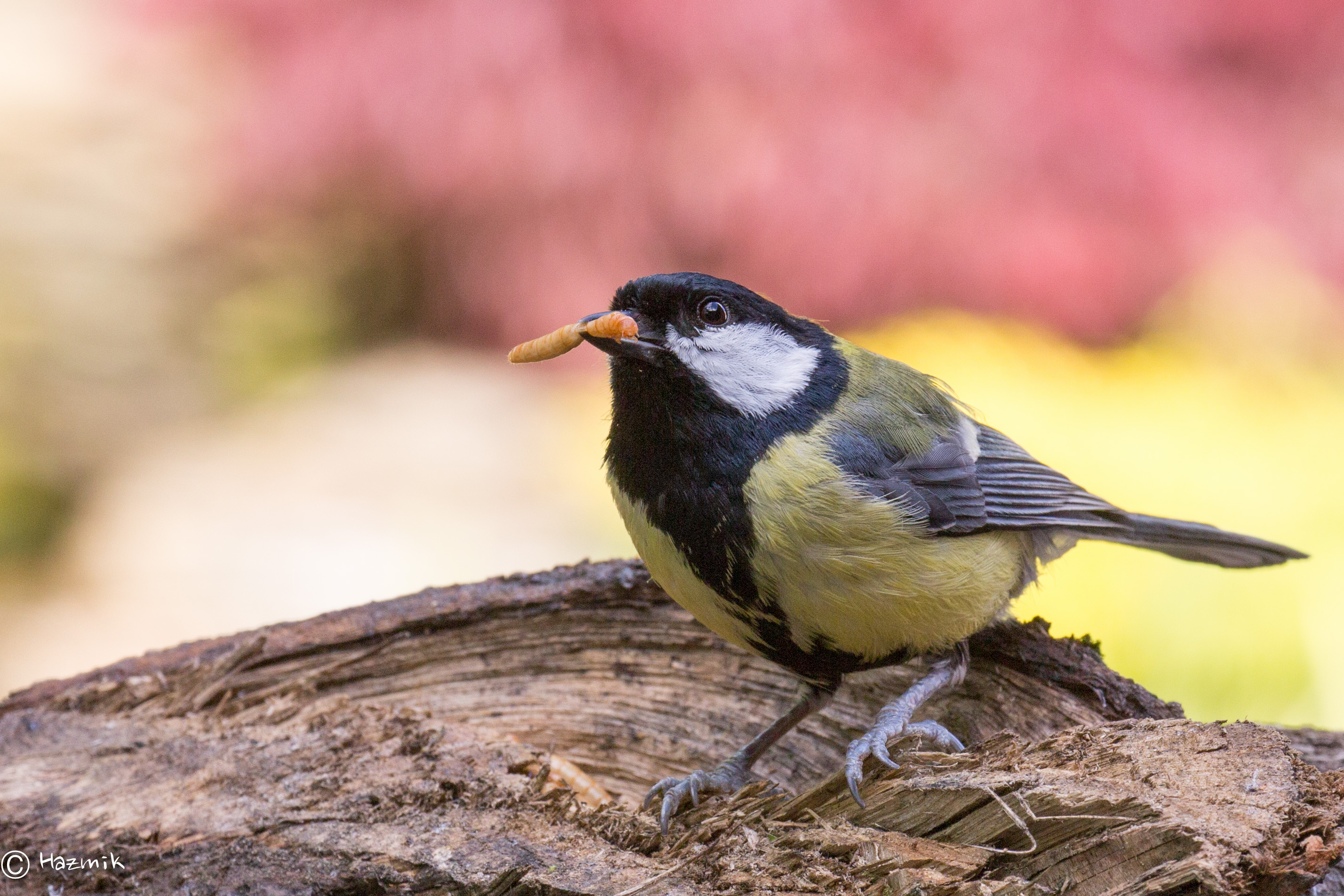 birds chat sites Search birds chat rooms within the internet relay chat search birds in chat room topics of around 500 irc networks current chat rooms: birds, generalrelativity, kspd&d, grenode, rainbot.