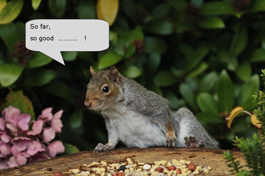 squirrel chatrooms Yahoo squirrel group chat allows users to create rooms & secret rooms for specific people and  use private chat rooms for confidential chats with those in the .