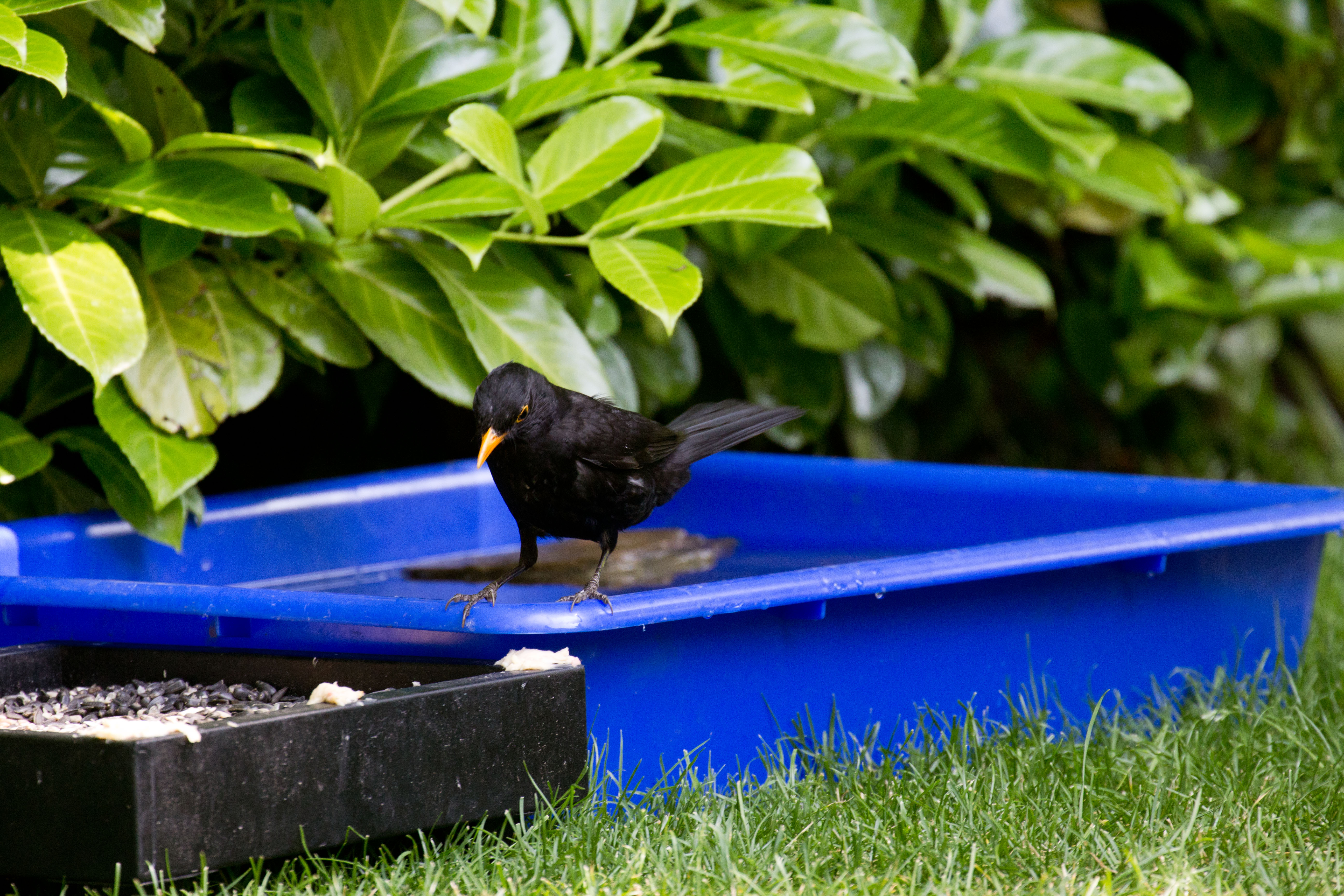 Swimming Pool For Birds The Tea Rooms Chat The