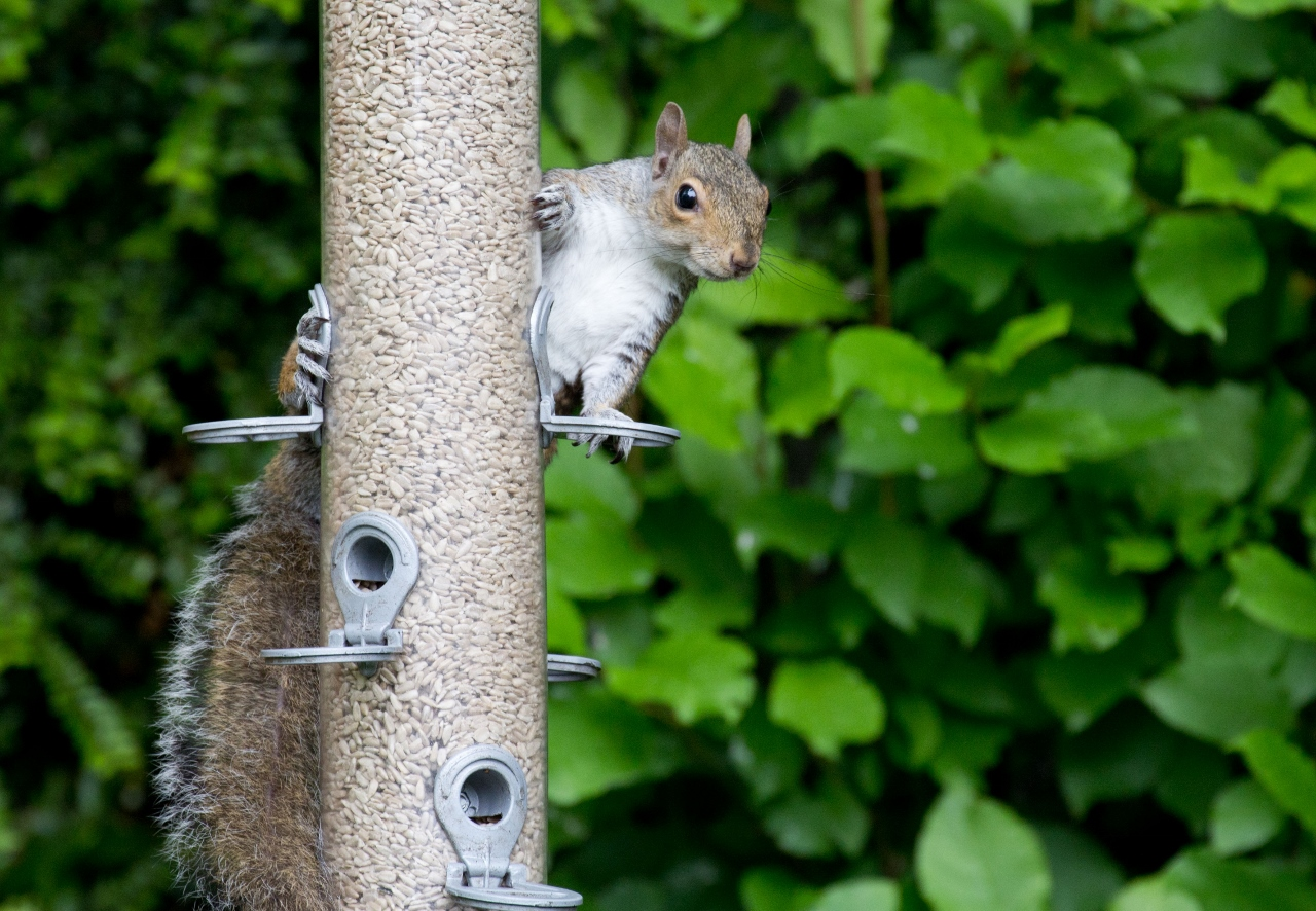 squirrel chat Squirrel is loading help chat faq log in email address please enter your email address your password please enter your.