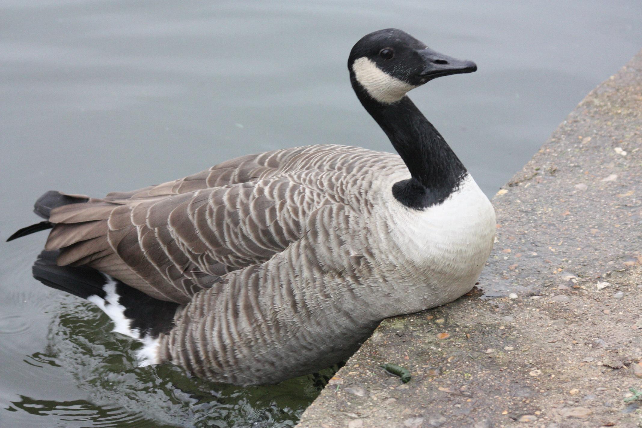 canada goose factory boisbriand