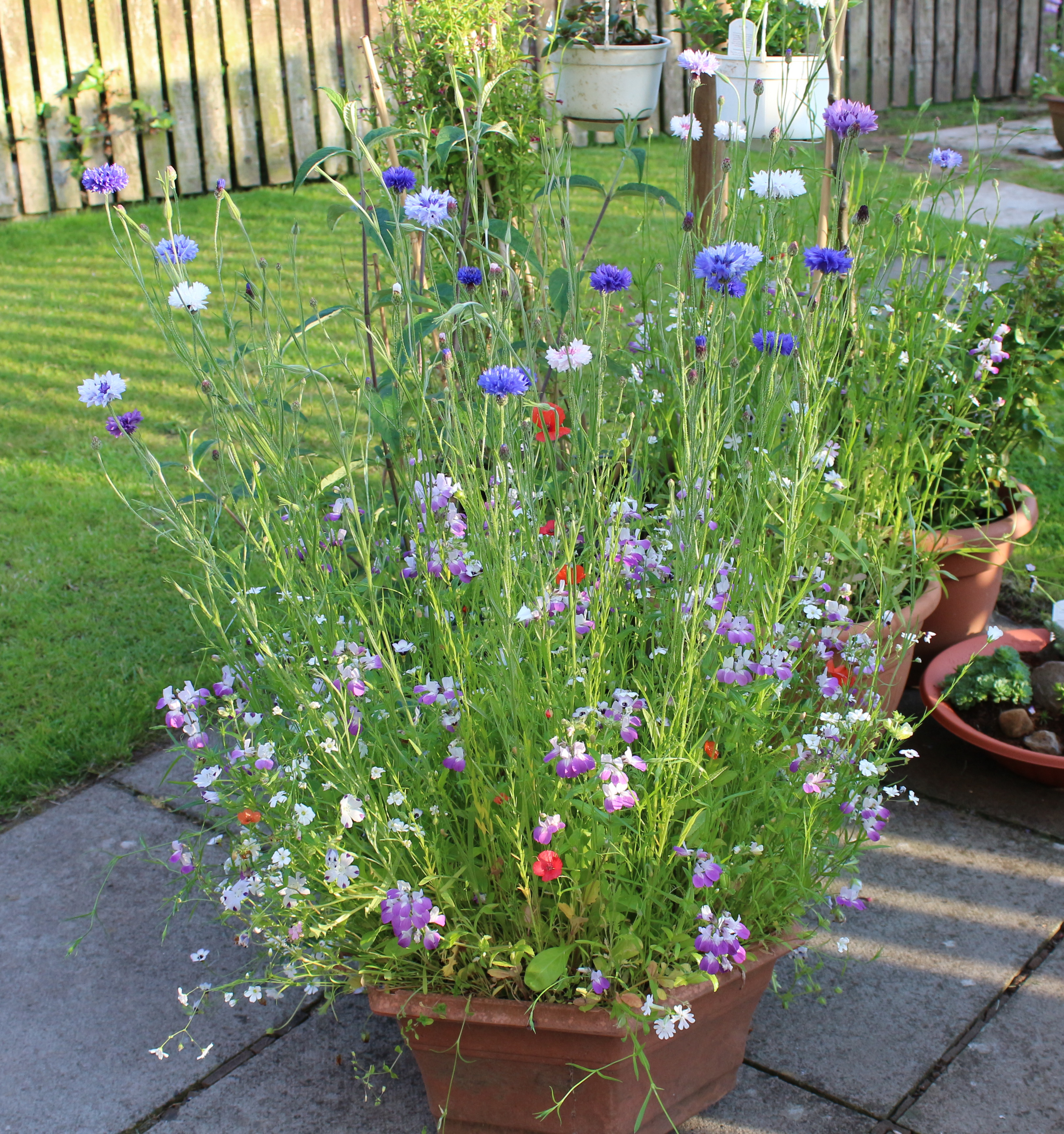 1 X Box Of Wild Flower Seeds, 1 Old Tub, Garden Soil, Add Water And .