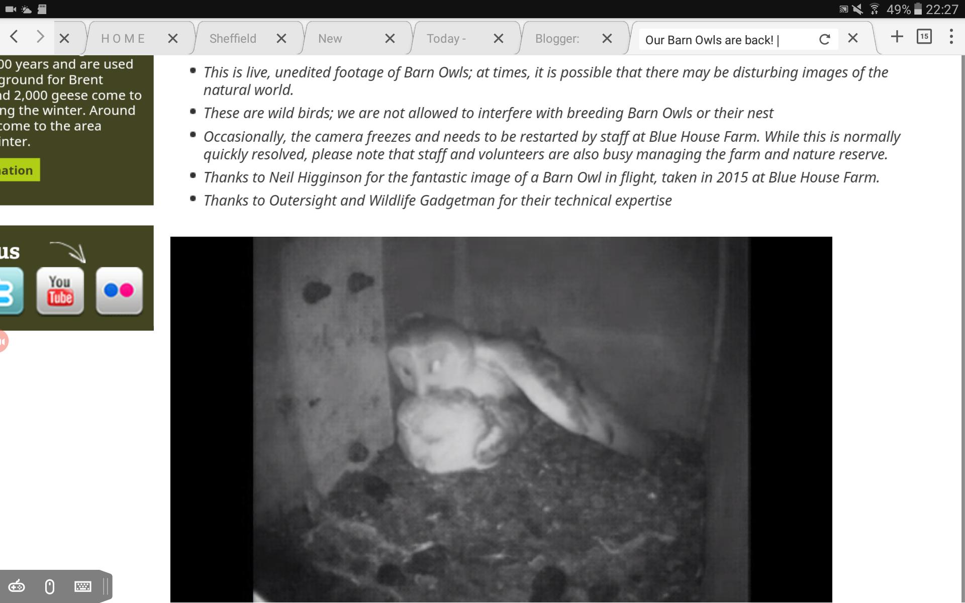 blue house farm barn owls 2017 (c)essex wildlife trust - wildlife