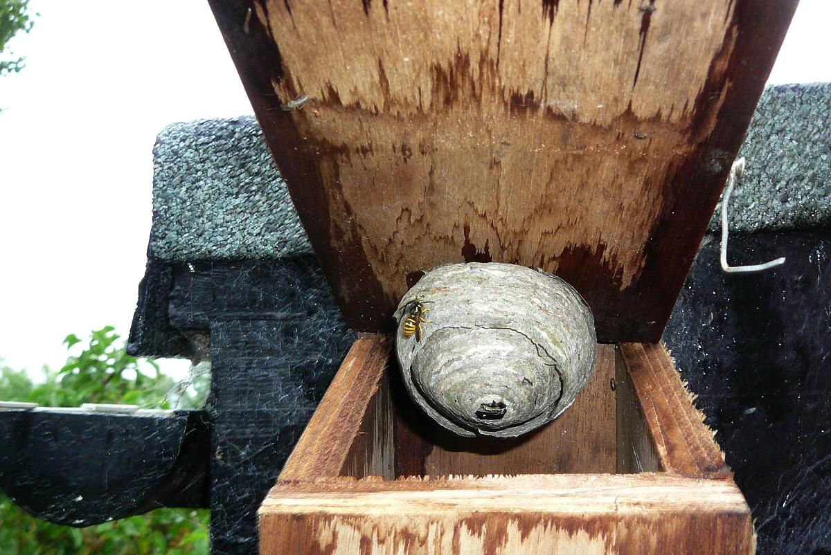 Bumble Bee Nest Box | www.pixshark.com - Images Galleries ...