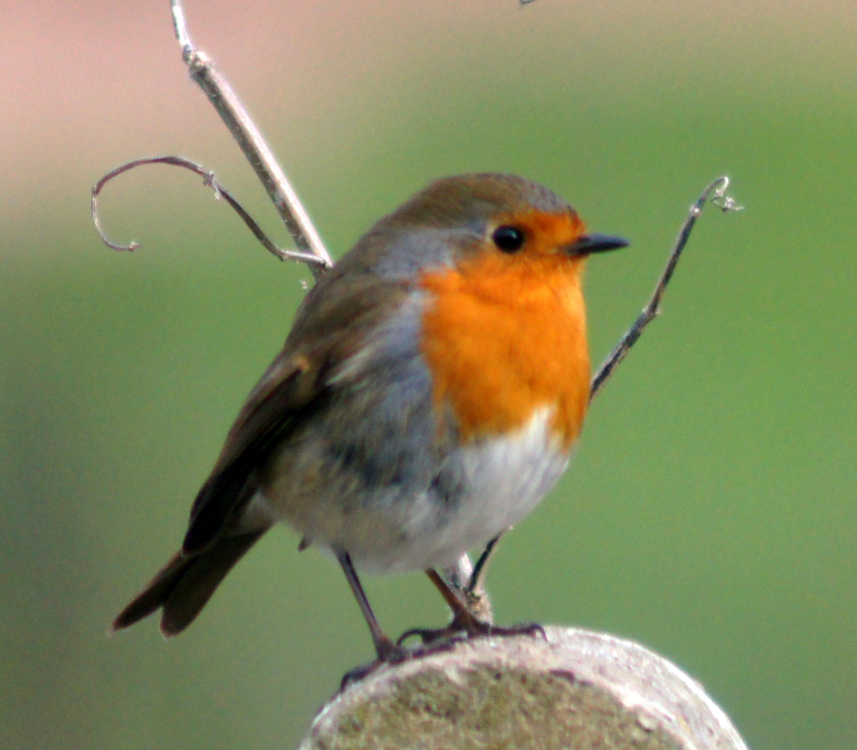 absolutely loving all the robins on here they are all so beautiful ...