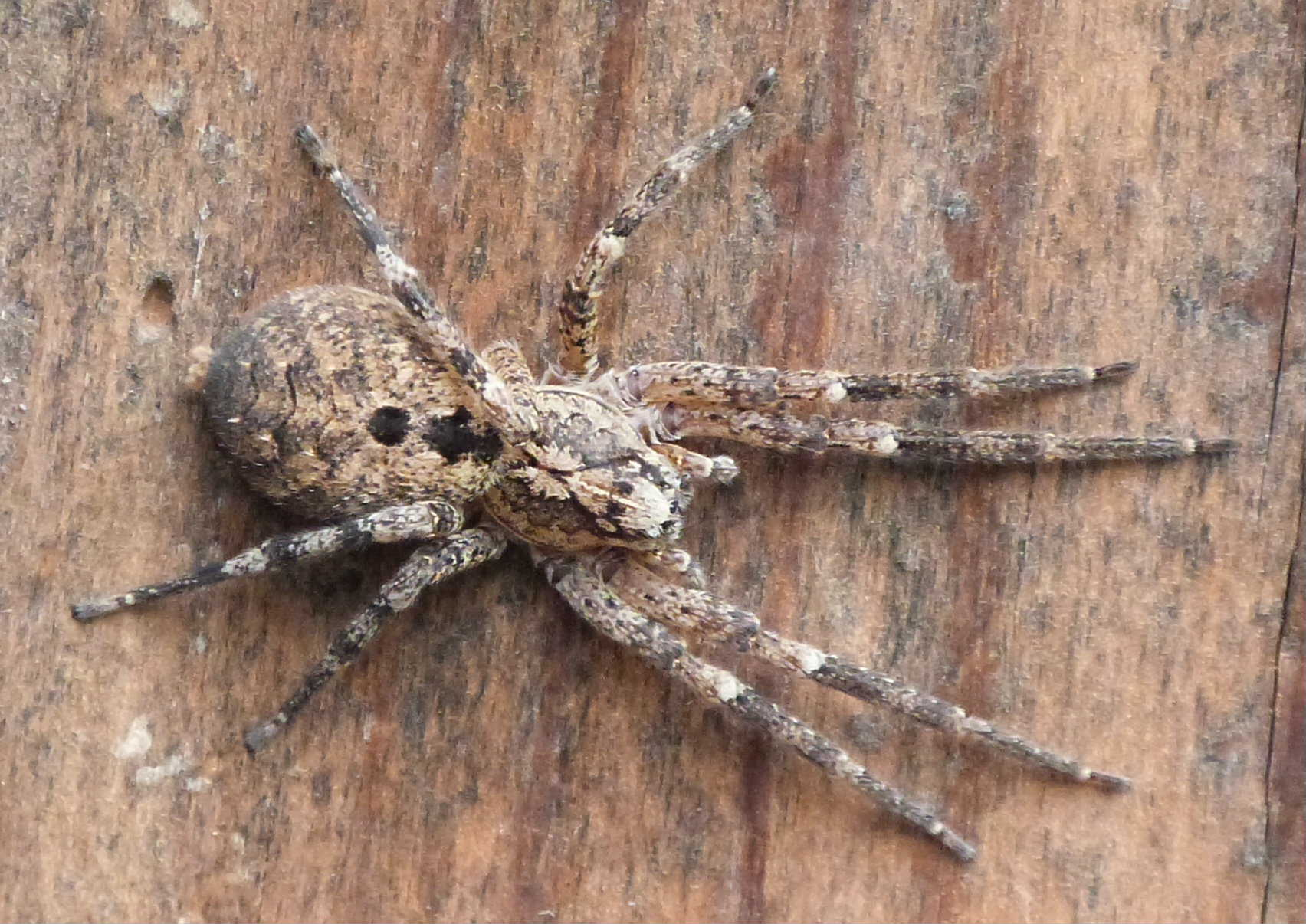 Simply Spiders - Wildlife in the garden - Homes for Wildlife - The ...