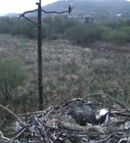 dyfi osprey project Montgomeryshire wildlife trust is looking for a bilingual, creative person to carry on the work of the dyfi osprey project for the 2016 season for one year.