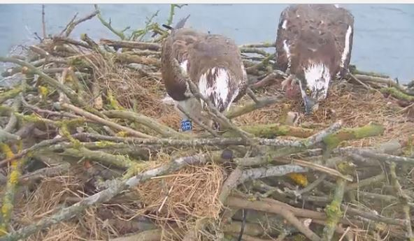 manton chat Chat about more home » places to visit » loch garten ospreys » loch garten ospreys » manton bay - march 2018 manton bay details about the manton bay.