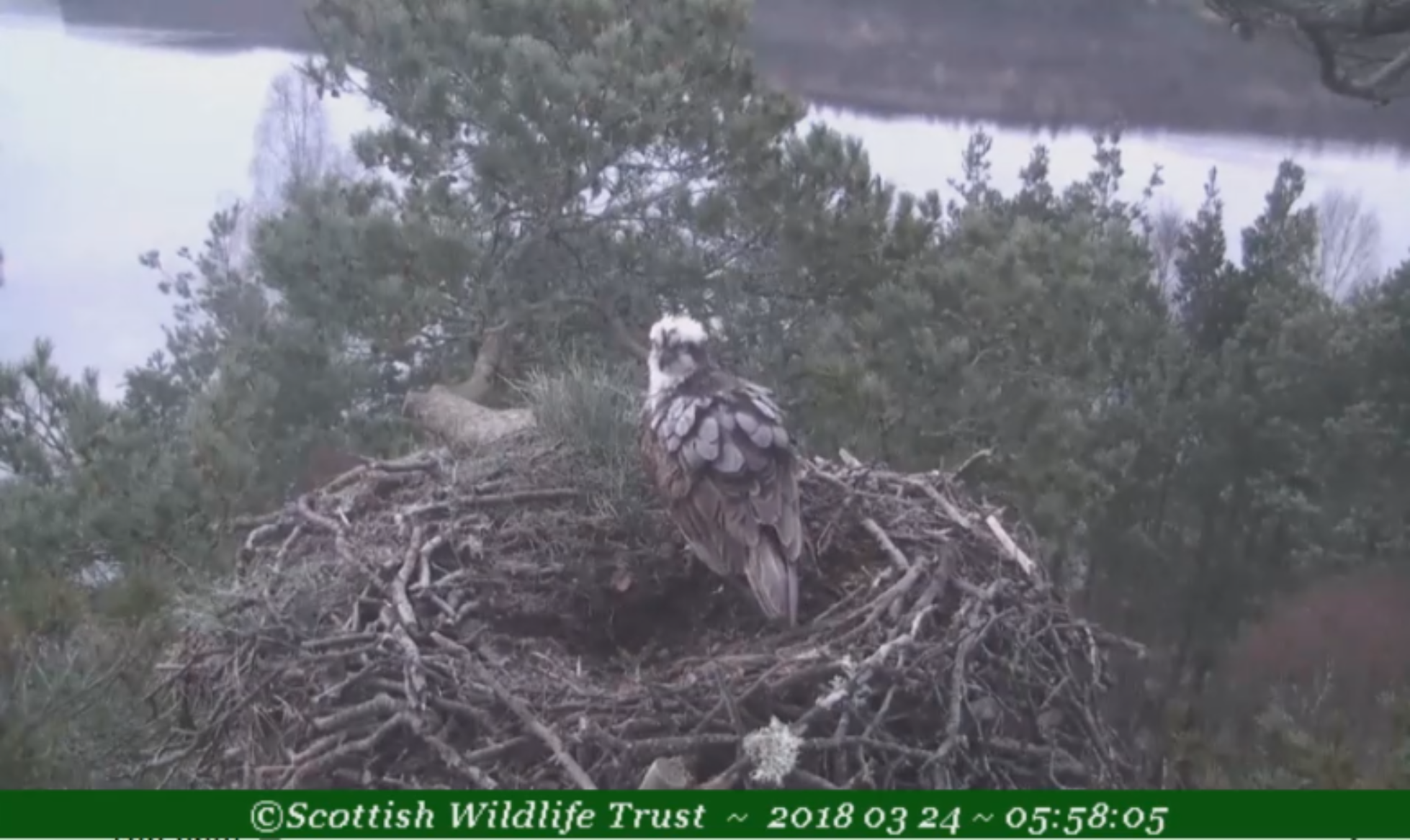 LOCH OF THE LOWES - MARCH 2018 - Loch Garten ospreys - Loch Garten