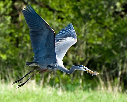 heron chat Whether you'd just like a chat to point you in the right direction or something more  formal, we'd love to hear from you hello@herongrangecom 01604 498830.