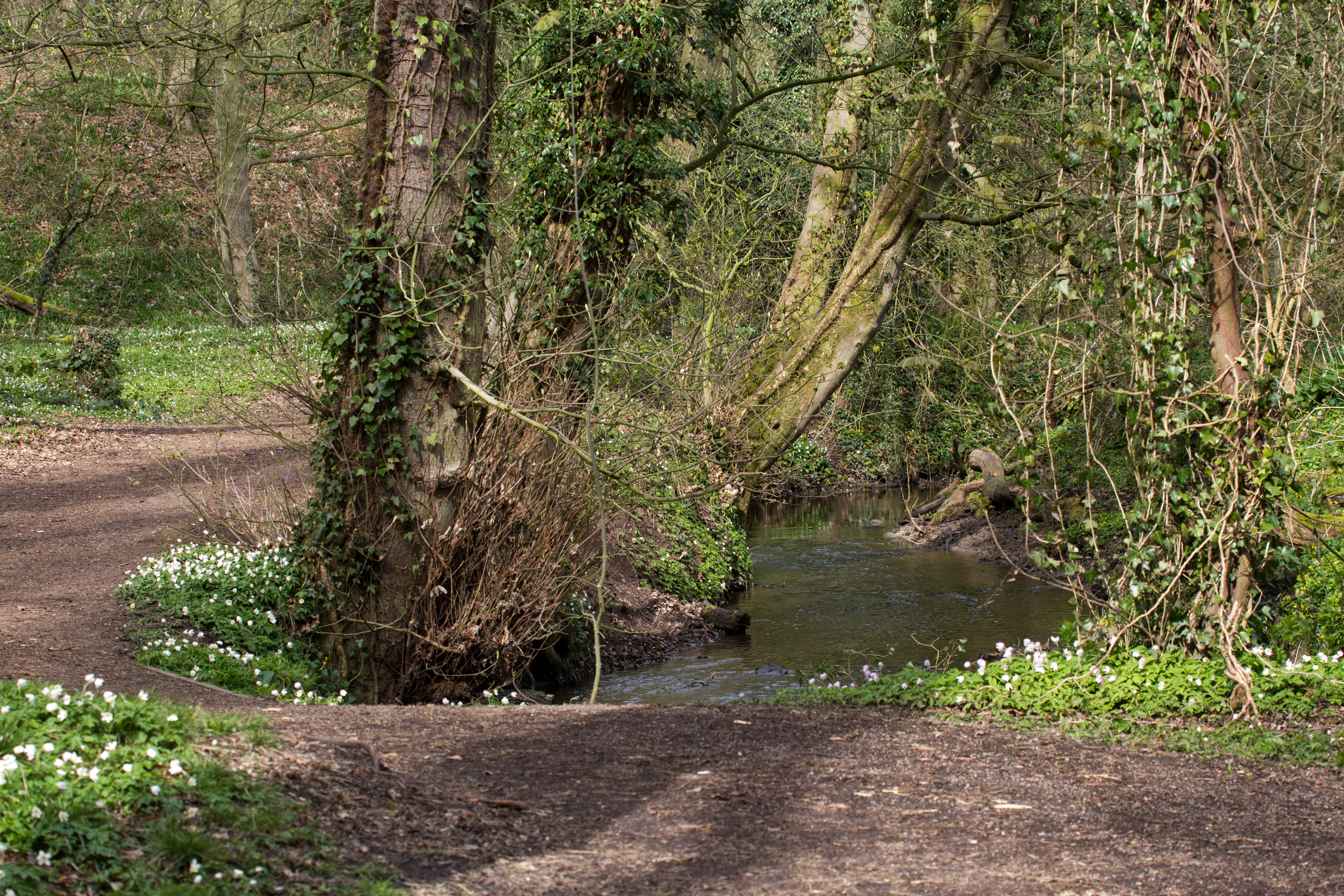 4786.Marbury-woods-1_2E00_.jpg