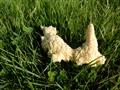 Dog Sick Slime Mould