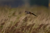 Hobby did a flypast at Townend 22/8/14...