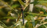 Migrant Hawker - by Mike Johnson