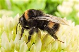 Bee loving the garden.