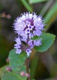 Wild Flower?