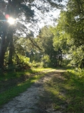 August late afternoon sun