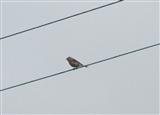 What's this bird?