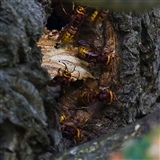 Hornet's nest becoming more active!