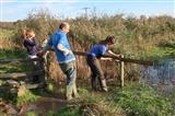 Fence repairs Exminster Marsh