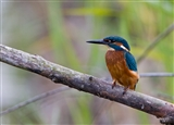old moor kingfisher
