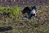 heron doing exerciser's