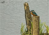 Kingfisher today