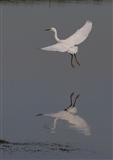 Ballet & mirrors (2)
